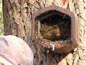02.Nest.w