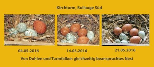 wDohlen_Turmf_Gelege.w