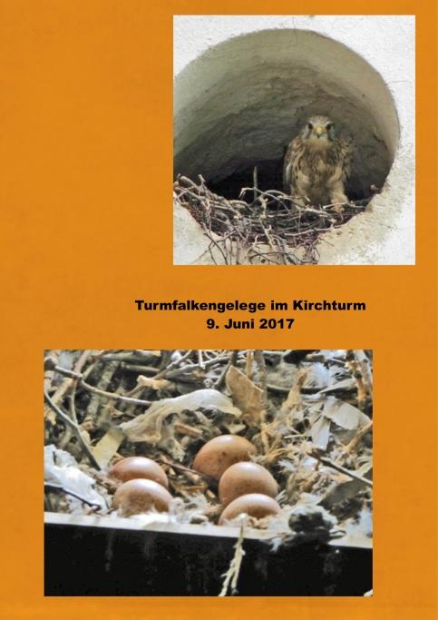 09.06.17_Turmfalken.w