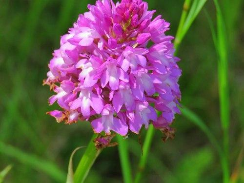 w03.Orchidee