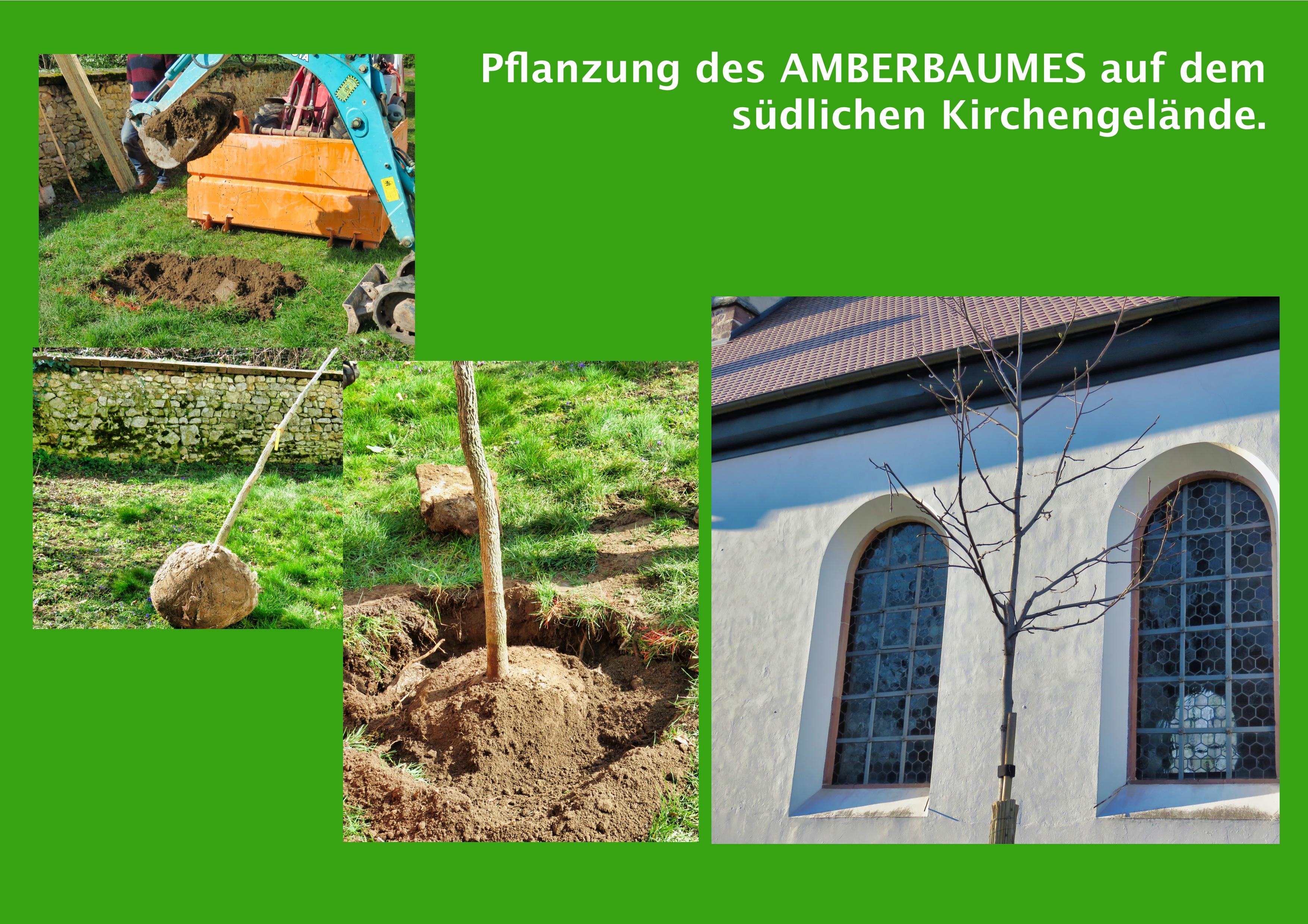 02-Amberbaumpflanzung